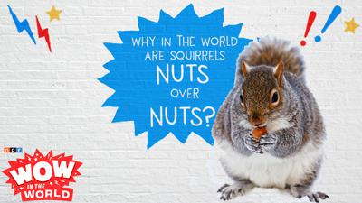 Cover art for That's NUTS!