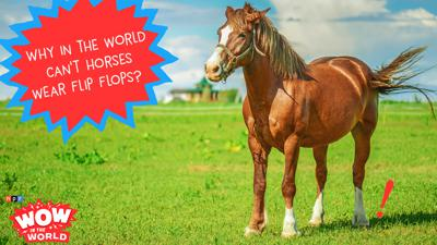 Cover art for Why Horses Can't Wear Flip Flops