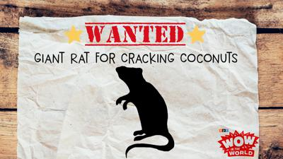 Cover art for WANTED: Giant Rat For Cracking Coconuts