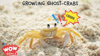 Cover art for Growling Ghost-Crabs