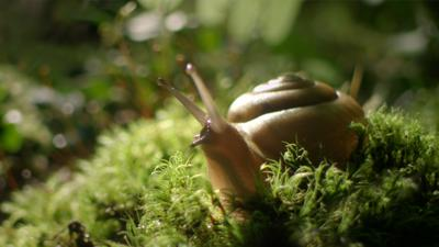Cover art for Lessons In Being Alone, From A Woodland Snail