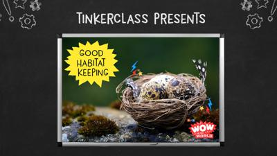 Cover art for Tinkerclass (Week 3 Day 5): Reflect & Share