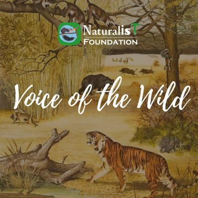 Voice of the Wild