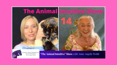 The Animal Intuitive Show