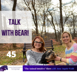 Cover art for Animal Communication With Bear! | Ep 45