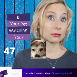 Cover art for Animal Communication//Your Pet Knows You! | Ep 47