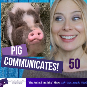 Cover art for Animal Communication with Pig Pig | Ep 50