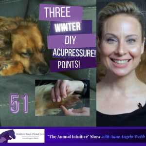 Cover art for Acupressure For Dogs and Cats In Winter | Ep 51