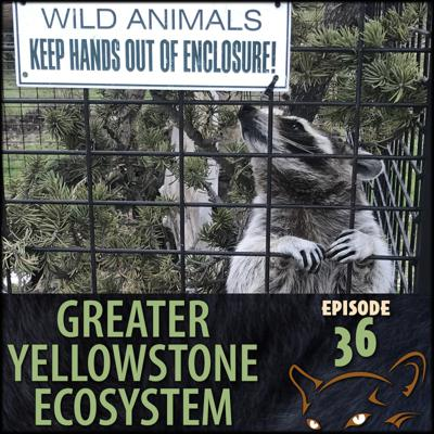Cover art for Episode 36: How Animals End Up In Sanctuaries