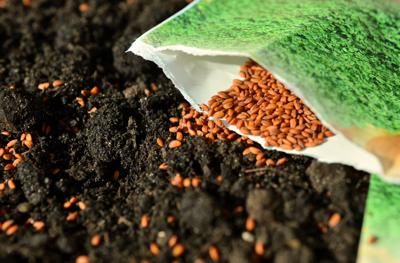 Cover art for Another look at the parable of the sower