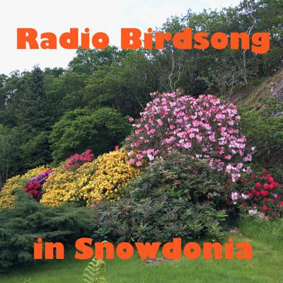 Cover art for Radio Birdsong from Snowdonia, North Wales