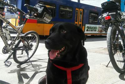 #21 Meet Eclipse, the Dog Who Rides the Bus!