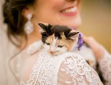Cover art for #17 Dogs in the Elevator and Chloe the Wedding Kitten