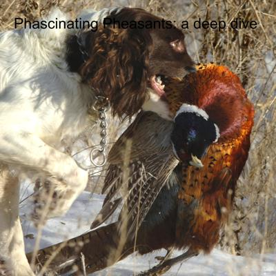 Cover art for Phascinating Pheasants: a deep dive