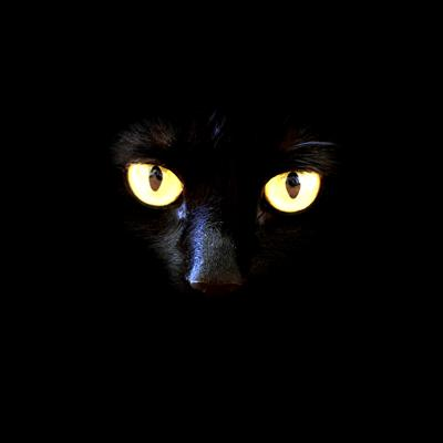 Cover art for Superstition: Black cats and devils and mirrors, oh my