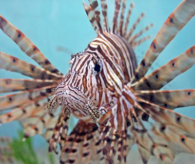 Cover art for 001 Lionfish Invasion