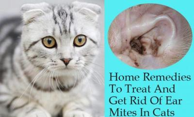 Cover art for [Ep84] 7 Inexpensive Ear Mite Remedies, Abscess Home Treatment, Poultice for Inflammation
