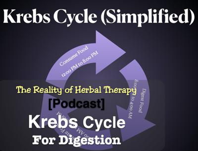 Cover art for The Krebs Cycle for Digestion