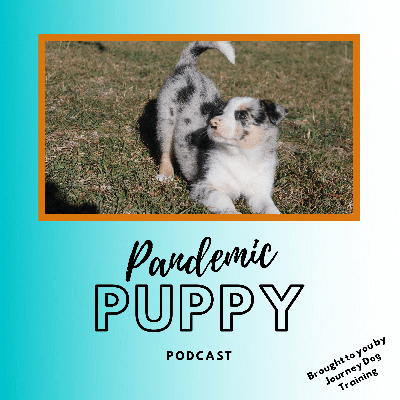 Pandemic Puppy Podcast