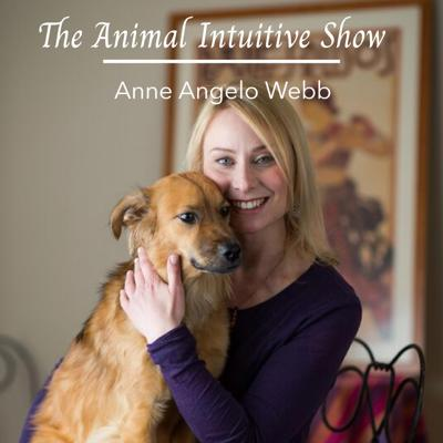 The Animal Intuitive demonstrates animal communication, acupressure, massage & energy work. Information about natural pet care, essentials oils & interviews with experts in the fields of animal care & advocacy.