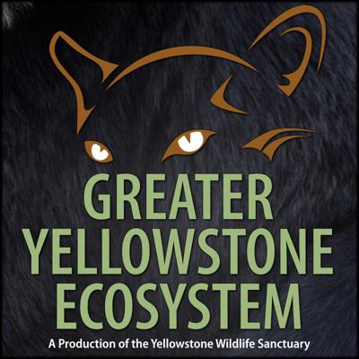 About the animals of the Greater Yellowstone Ecosystem, hosted by Gary Robson of the Yellowstone Wildlife Sanctuary.