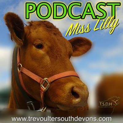 Welcome to Miss Lilly's Podcast. Award winning Champion South Devon Cow with a big personality from the Team Trevoulter Pedigree South Devon Herd. Entertaining you from the Farm and Shows through out the year. Just for fun hope you like it. Don't forget to like and follow!