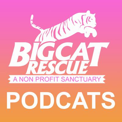 Love big cats? Big Cat Rescue videos incl. lions, tigers, leopards, jaguars, and more wild cats.  Get your weekly show of exotic cats here.