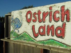 Cover art for 01 - Ostrichland, Buellton CA - Road Sweet Road