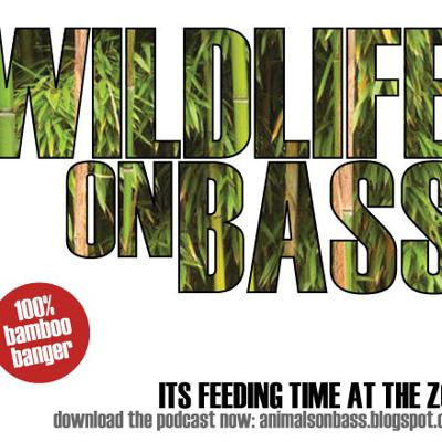Wildlife On Bass