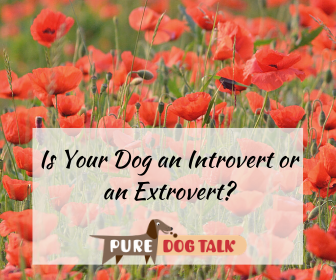Cover art for 395 – Is Your Dog an Introvert or an Extrovert?