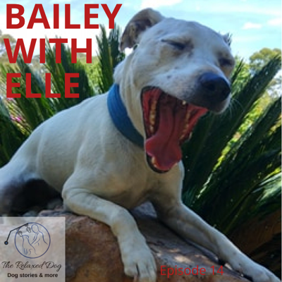 Cover art for E14 Bailey with Elle