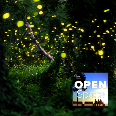 Cover art for How Parks Can Ensure Fireflies Continue to Shine Bright — April Bonus Episode