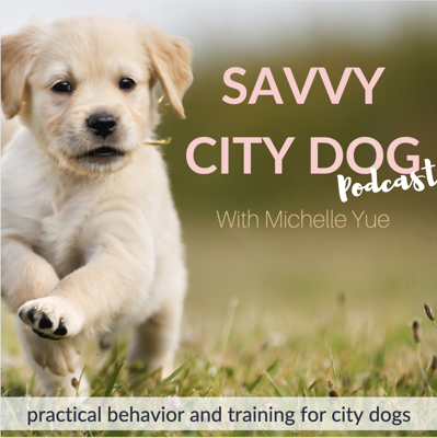 Cover art for Puppy Plays Too Rough, Biting Other Puppies | Puppy Training