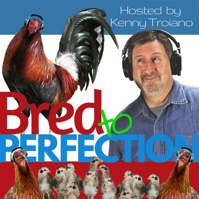 Cover art for Ep50 – Chicken Chat with Tony Saville