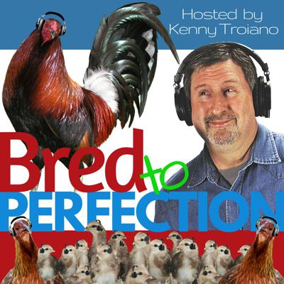 Bred to Perfection is a podcast that will help you to master the art of selective breeding, and become a master breeder of chickens and gamefowl. The podcast is hosted by Kenny and Nancy Troiano. Kenny Troiano has more than 40 years of experience, and has authored two books on the subject of breeding. If you are interested in creating, maintaining, and improve your strain, this is the place for you.