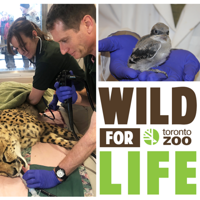 Wild For Life is the Toronto Zoo podcast that brings you behind the scenes and unveils the
