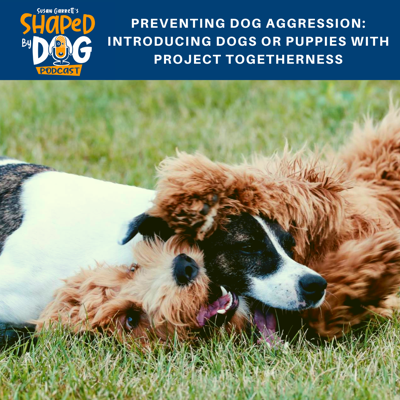Cover art for Preventing Dog Aggression: Introducing Dogs or Puppies with Project Togetherness
