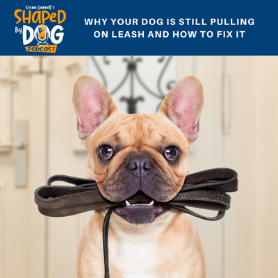 Cover art for Why Your Dog Is Still Pulling on Leash And How To Fix It