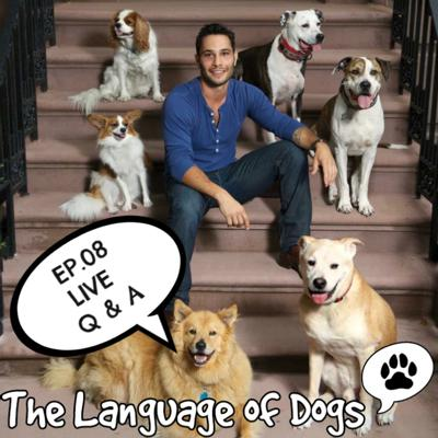 Cover art for EP. 08 Live Feed Dog Q&A