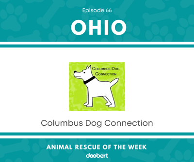 Cover art for Animal Rescue of the Week: Episode 66 – Columbus Dog Connection