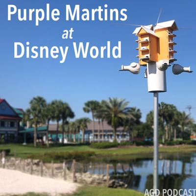 Cover art for AGD 7 - Purple Martins at Disney World