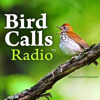 BirdCallsRadio