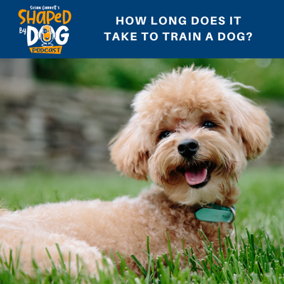 Cover art for How Long Does It Take to Train a Dog?