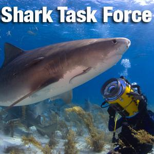 Shark Task Force