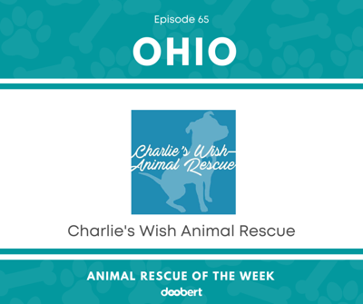 Cover art for Animal Rescue of the Week: Episode 65 – Charlie's Wish Animal Rescue