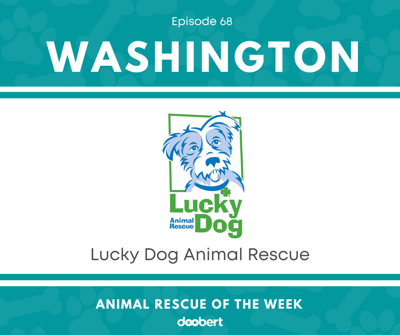 Cover art for Animal Rescue of the Week: Episode 68 – Lucky Dog Animal Rescue
