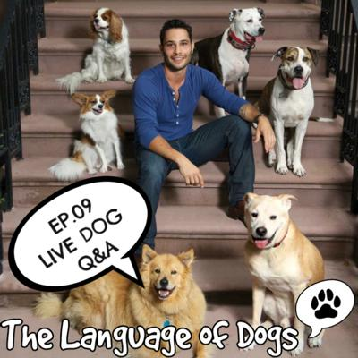 Cover art for EP. 09 Live Dog Q & A