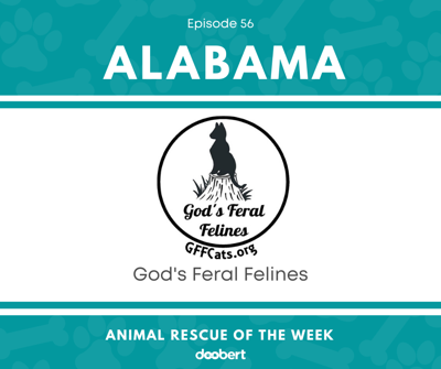 Cover art for Animal Rescue of the Week: Episode 56 – God's Feral Felines