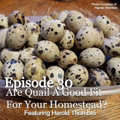 Cover art for S1E30 Are Quail A Good Fit For Your Homestead? With Special Guest Harold Thornbro