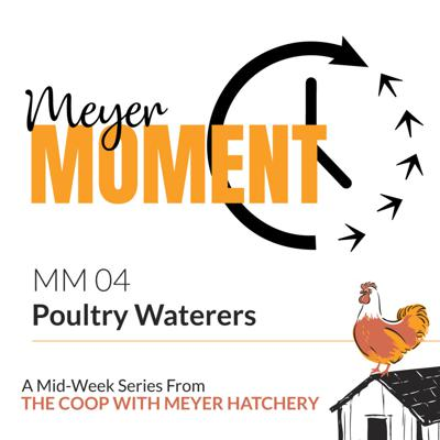Cover art for Meyer Moment: Poultry Waterers + National Humor Month!